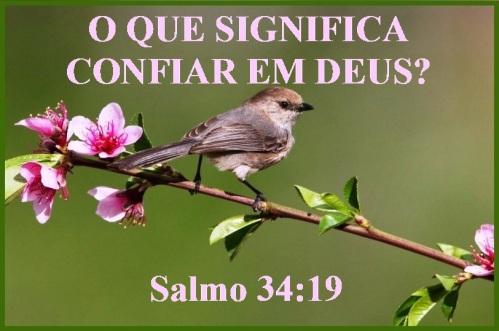 salmo-34-vs-19-p